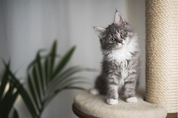 Kedi sahibi olmanın 4 faydası